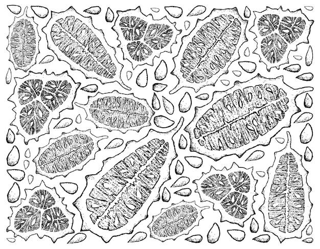 Hand getekende gehoornde meloen of kiwano