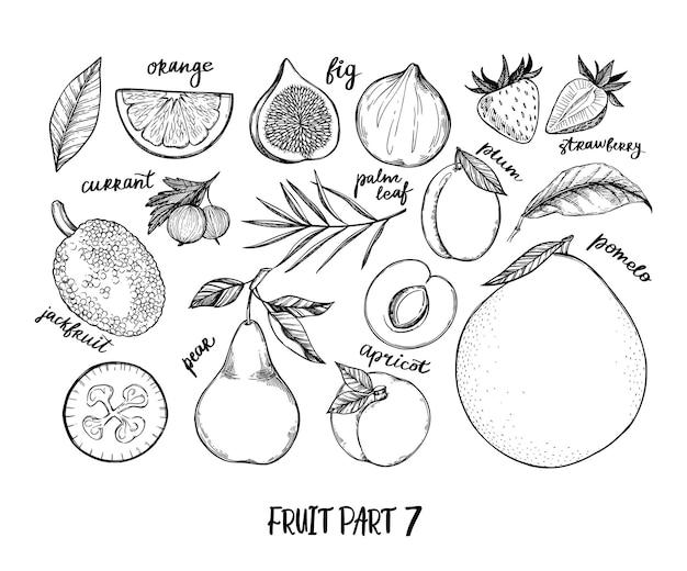 Hand getekende illustratie - verzameling van tropische en exotische vruchten. gezonde voedingselementen.