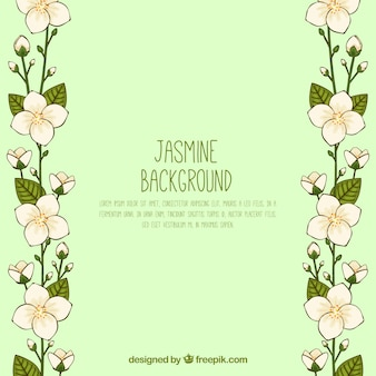 Hand getekende jasmine bckground met moderne stijl
