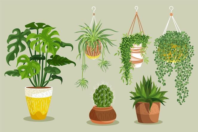 Hand getekende kamerplant collectie