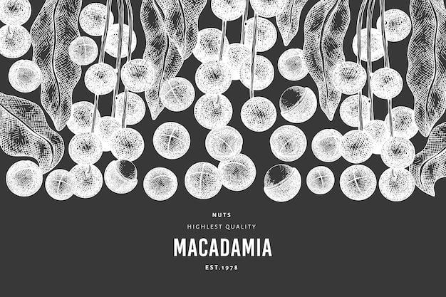 Hand getekende macadamia tak en kernels ontwerpsjabloon. biologisch voedsel vectorillustratie op schoolbord. vintage moer illustratie. botanische banner in gegraveerde stijl.