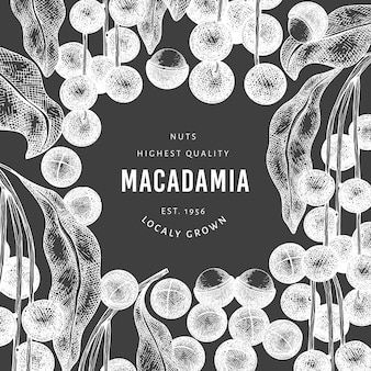 Hand getekende macadamia tak en kernels ontwerpsjabloon. biologische voeding vectorillustratie op schoolbord. vintage moer illustratie. botanische banner in gegraveerde stijl.