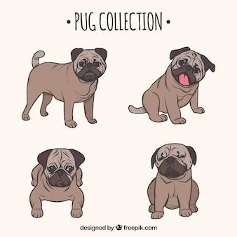Hand getekende pug collectie
