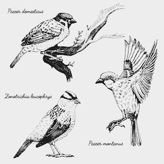 Hand getekende realistische vogel, schets grafische stijl,