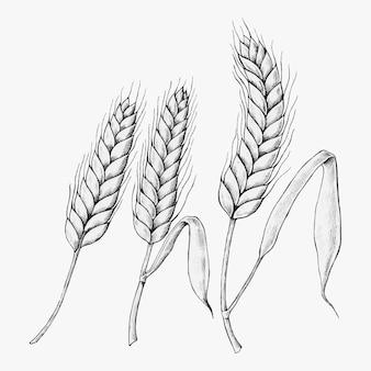 Hand getekende tarwe oren vector