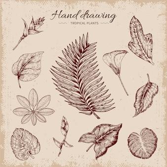 Hand getekende tropische planten illustratie