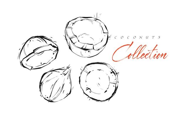 Hand getekende vector abstracte exotische grafische inkt getextureerde tropische vruchten kokosnoten illustraties collectie instellen schets tekening geïsoleerd op een witte achtergrond. gezonde levensstijl concept.