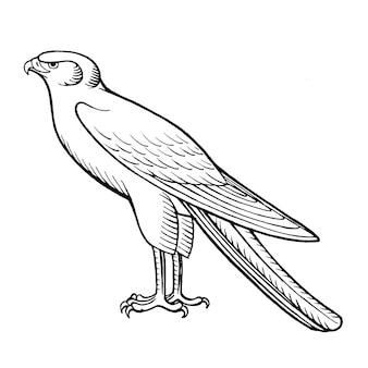 Hand getekende vectorillustratie van falcon geïsoleerd op wit voor kleurboek