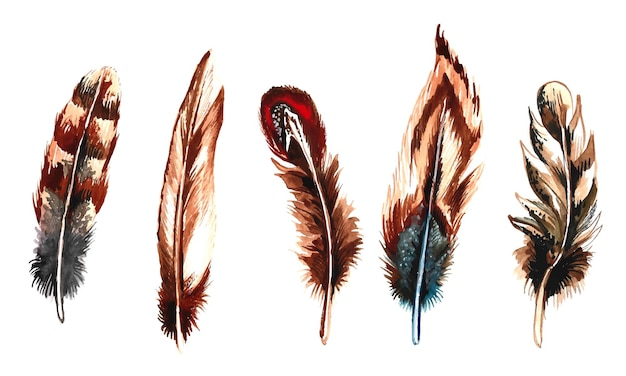 Hand getekende veren aquarel ingesteld op witte achtergrond