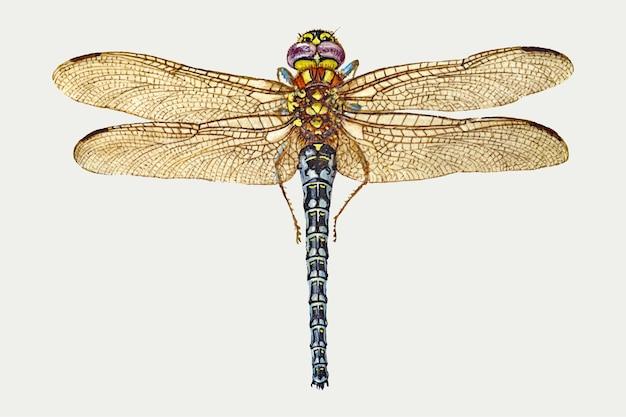 Hand getekende vliegen insect vector