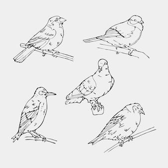Hand getekende vogels collectie