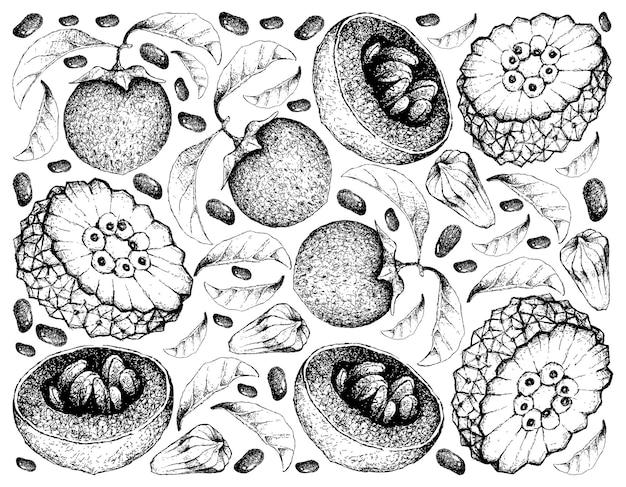 Hand getrokken achtergrond van australische zwarte sapote en pindaiva-vruchten