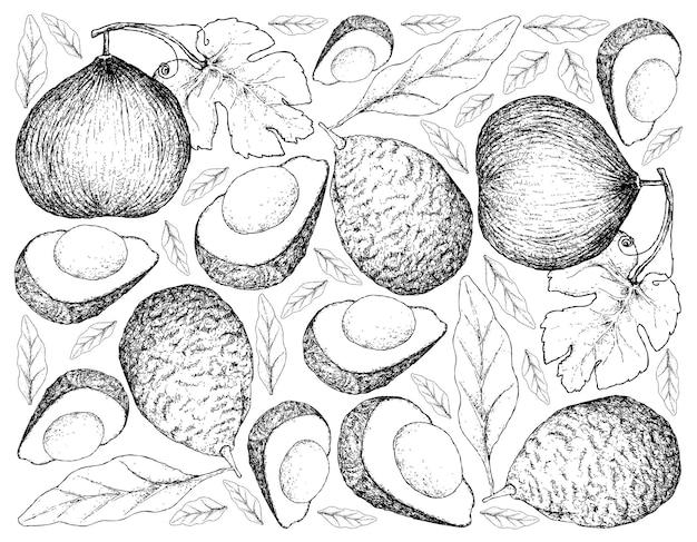 Hand getrokken achtergrond van casaba meloen en avocado's
