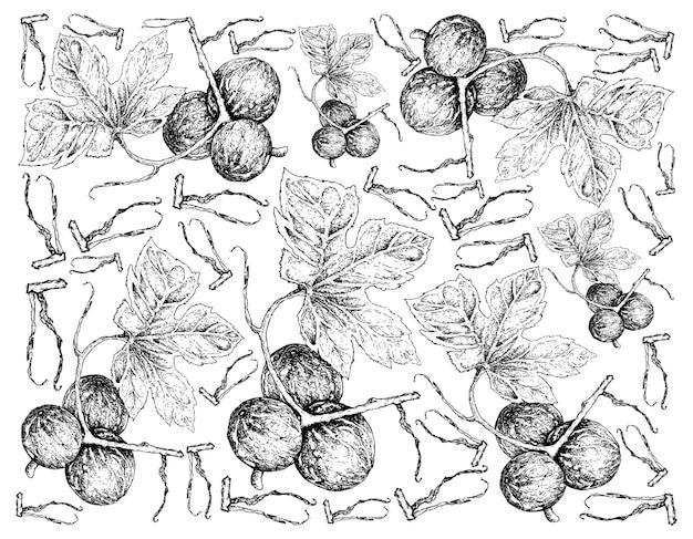 Hand getrokken achtergrond van diplocyclos palmatus fruit