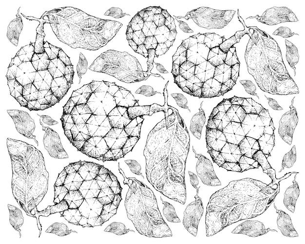 Hand getrokken achtergrond van duguetia furfuracea-vruchten