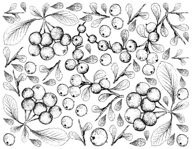 Hand getrokken achtergrond van flueggea virosa en firethorn bessen fruit