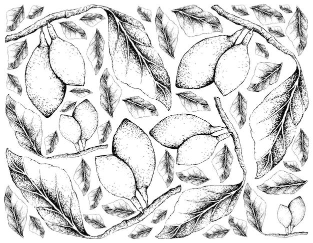 Hand getrokken achtergrond van verse curriola-vruchten