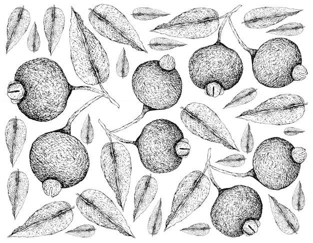 Hand getrokken behang van guabiju fruit op witte achtergrond
