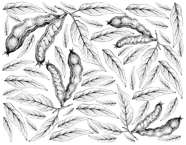 Hand getrokken behang van ijs bonen op witte achtergrond