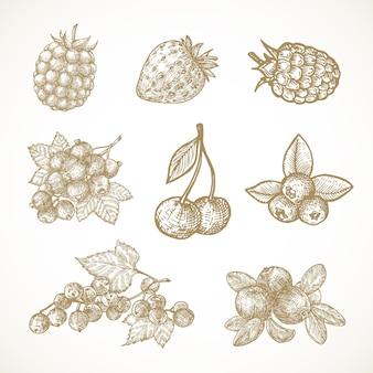 Hand getrokken bessen vector illustraties collectie kersen redribes bes cranberry aardbei en ...