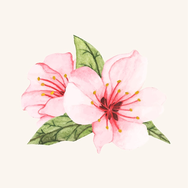Hand getrokken bloem geïsoleerd