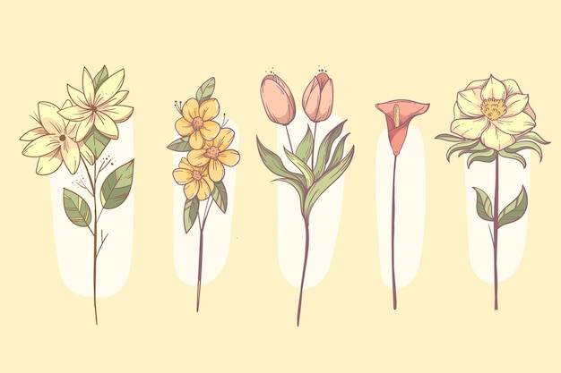 Hand getrokken bloemenset