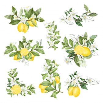 Hand getrokken boeketten en composities van bloeiende citroenboomtakken
