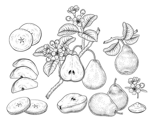 Hand getrokken botanische illustraties