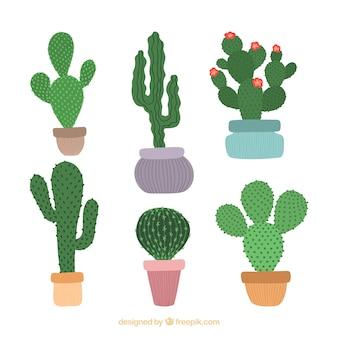 Hand getrokken cactus collectie