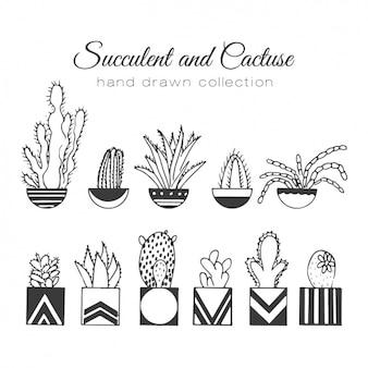 Hand getrokken cactus set