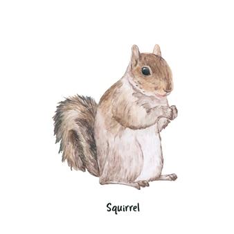 Hand getrokken eekhoorn op witte achtergrond wordt geïsoleerd die
