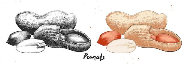 Hand getrokken ets schets van pinda's