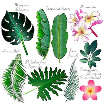 Hand getrokken exotische planten