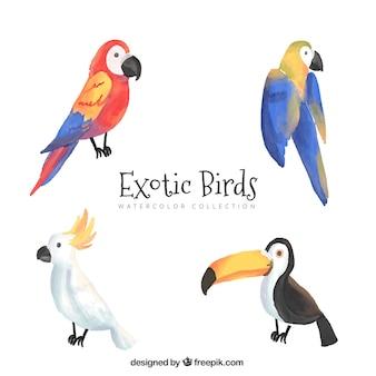 Hand getrokken exotische vogels collectie