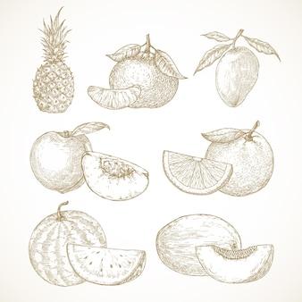 Hand getrokken fruit vector illustraties collectie ananas mango mandarijnen perziken en watermeloen ...