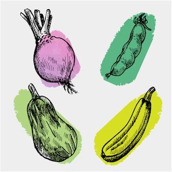 Hand getrokken groenten collectie