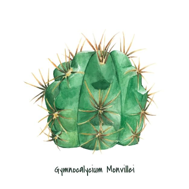 Hand getrokken gymnocalycium monvillei cactus