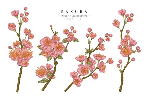 Hand getrokken illustratie kersenbloesem bloem decoratieve set geïsoleerd op een witte achtergrond