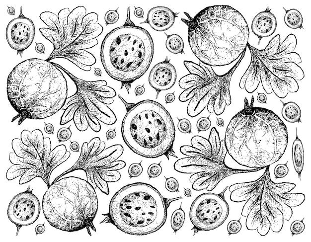 Hand getrokken indiase kruisbes fruit