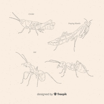 Hand getrokken insecten schetsen collectie