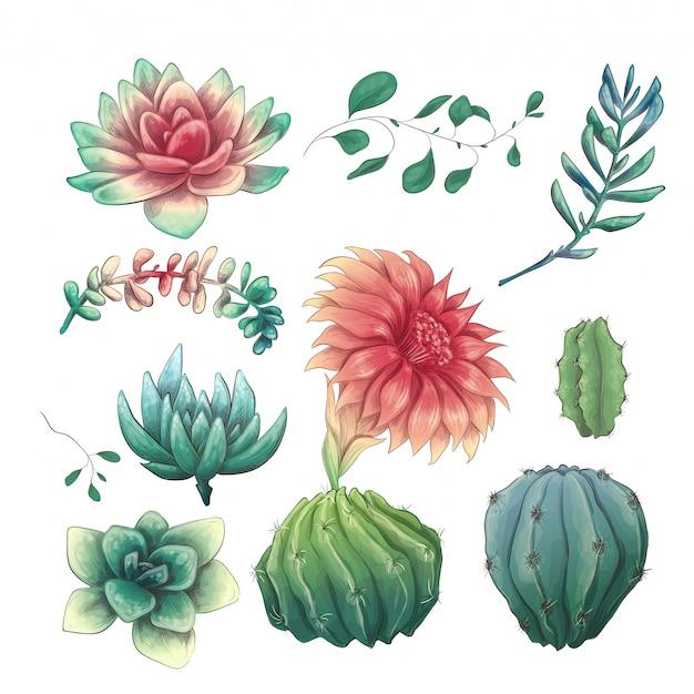 Hand getrokken kleurrijke cactussen en succulente set.