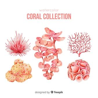 Hand getrokken kleurrijke koraal collectie