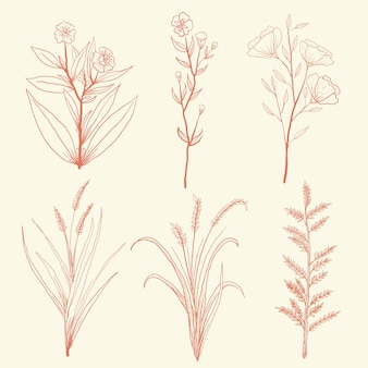 Hand getrokken kruiden wilde bloem met vintage stijl instellen