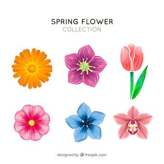Hand getrokken lente bloemen collectie