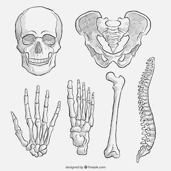Hand getrokken lichaamsdelen