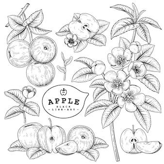 Hand getrokken lijntekeningen apple decoratieve set geïsoleerd op een witte achtergrond