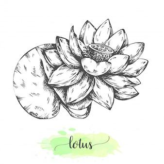 Hand getrokken lotusbloemen. bloeiende waterlelies op wit wordt geïsoleerd. vectorillustratie in vintage stijl. schets van tropisch bloemoverzicht waterlily