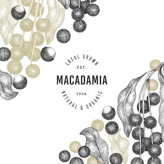 Hand getrokken macadamia tak en pitten ontwerpsjabloon.