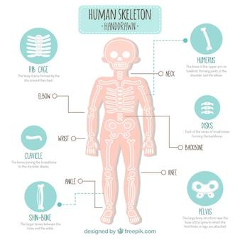 Hand getrokken menselijk skelet