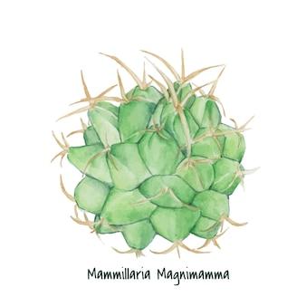 Hand getrokken mexicaanse speldenkussen cactus